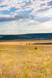 Steppe. Crimean steppe. Orange landscape with clouds sky Royalty Free Stock Image