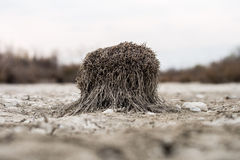 Steppe Details Royalty Free Stock Image