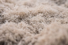 Steppe Details Stock Image