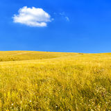 Steppe with dry grass Royalty Free Stock Image