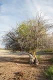 steppe ensam tree saltdamm Treeless fattig fuktighet och general royaltyfri fotografi