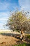 steppe ensam tree saltdamm Treeless fattig fuktighet och general royaltyfri bild