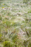 Steppe feather Royalty Free Stock Images