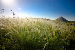 Steppe of feather grass Royalty Free Stock Photography