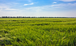 Steppe grass Royalty Free Stock Images