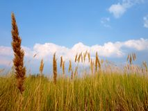 Steppe grass Royalty Free Stock Photography