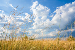 Steppe grass on the background of blue sky Stock Image