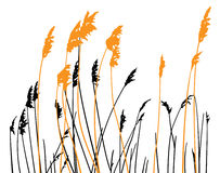 Free Steppe Grass On White Background Stock Photography - 81073532