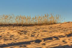 Steppe grass on a sunset background. The dried grass is illuminated by the sun in warm shades.