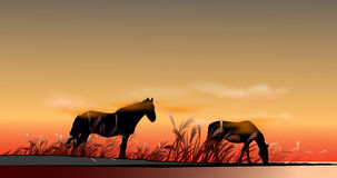 Steppe horse. Horse in the desert at sunset Royalty Free Stock Photography