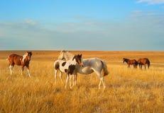 Steppe horses Stock Photo