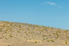 steppe Humidité déboisée et pauvre et secteur généralement plat avec le gra image stock