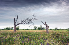 Steppe landscape. Crimean steppe in June Stock Images