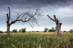 Steppe landscape. Crimean steppe in June Royalty Free Stock Photo