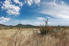 Steppe landscape with wild vegetation, Ukraine, Donetsk region Stock Photos
