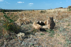 Steppe landscape with wild vegetation, Ukraine, Donetsk region Royalty Free Stock Image