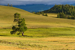 Steppe mountains tree Stock Images