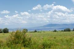 Steppe, prairie, veld, Stock Image