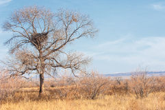 Steppe Stock Photography