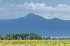 Steppe, prairie, veld, veldt. Royalty Free Stock Image