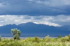 Steppe, prairie, veld, veldt. Royalty Free Stock Images