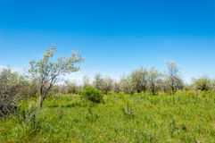 Steppe, prairie, veld, veldt Royalty Free Stock Photo