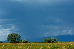 Steppe, prairie, veld, veldt Stock Image