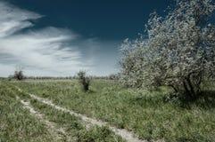 Steppe, prairie, veld, veldt Royalty Free Stock Photos