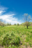 Steppe, prairie, veld, veldt Royalty Free Stock Image
