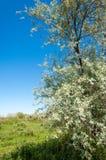 Steppe, prairie, veld, veldt Royalty Free Stock Photo