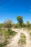 Steppe, prairie, veld, veldt Stock Images