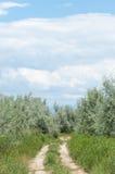 Steppe, prairie, veld, veldt Royalty Free Stock Photography