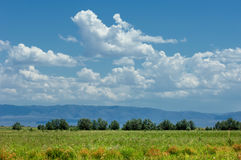 Steppe, prairie, veld, veldt Royalty Free Stock Images