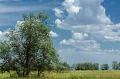 Steppe, prairie, veld, veldt Stock Photography