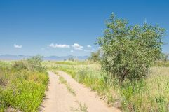Steppe, prairie, veld, veldt. A large area of flat unforested grassland in southeastern Europe or Siberia royalty free stock photo