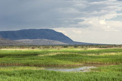 Steppe, prairie, veld, veldt. Royalty Free Stock Images