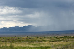 Steppe, prairie, veld, veldt. Royalty Free Stock Photos