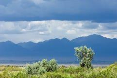 Steppe, prairie, veld, veldt. Stock Photography