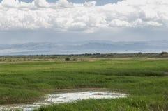 Steppe, prairie, veld, veldt. Stock Photos