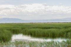 Steppe, prairie, veld, veldt. Stock Image