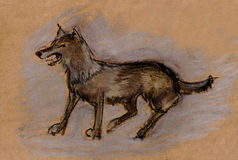 A  steppe red wolf Stock Image