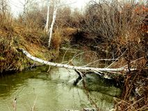 Autumn on the river. Through the steppe River dropped white birch Stock Image