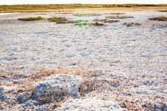Steppe saline soils of Kazakhstan. Close up view Stock Photo