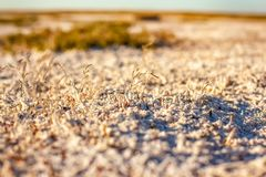 Steppe saline soils of Kazakhstan. Close up view Royalty Free Stock Images