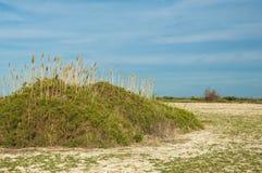 steppe Salthaltig buskevegetation Treeless fattig fuktighet och gen arkivfoton