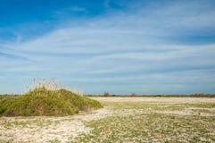 steppe Salthaltig buskevegetation Treeless fattig fuktighet och gen arkivbild