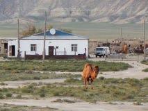 Steppe settlement. Stock Image