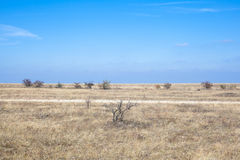Steppe Stock Image