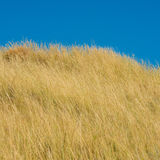 Steppe Stock Images