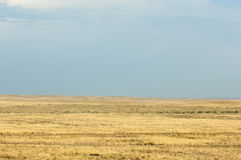 Steppe in the summer. Central Asia Kazakhstan Stock Image